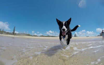 Estreno de playa para perros e indignación vecinal.
