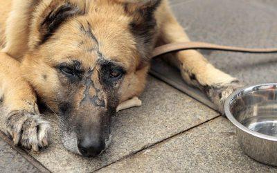 Perfil psicológico de un maltratador de animales
