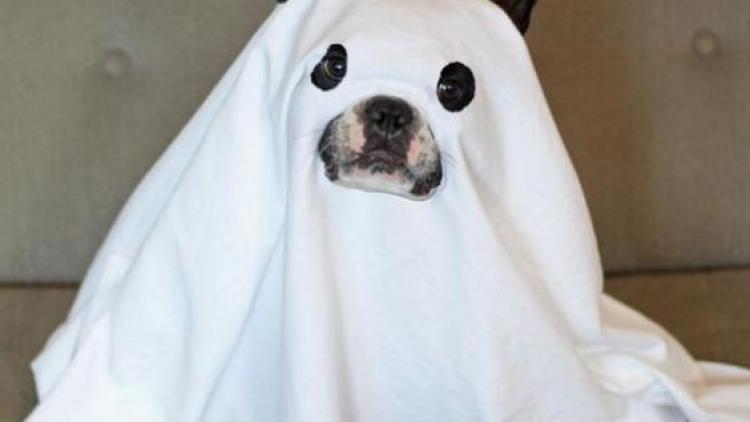 Halloween para nuestras mascotas