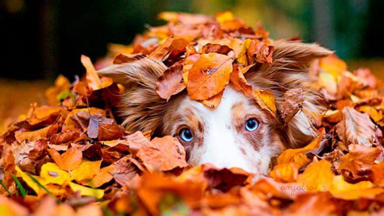Cuidar del pelo de tu mascota en otoño