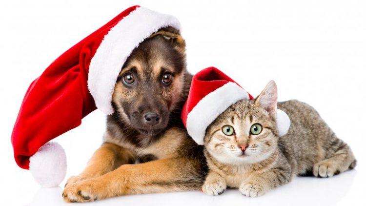 Papá Noel también se acuerda de tu mascota