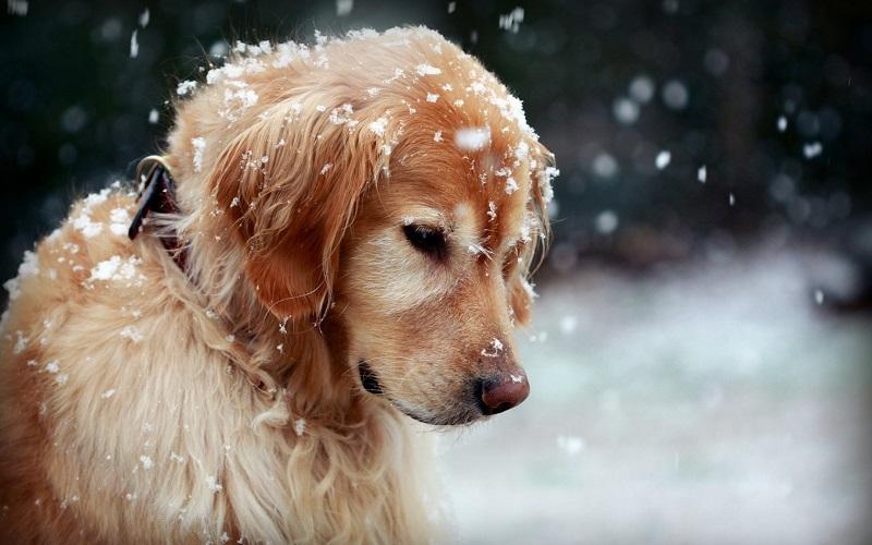 cuidar de tu mascota en invierno
