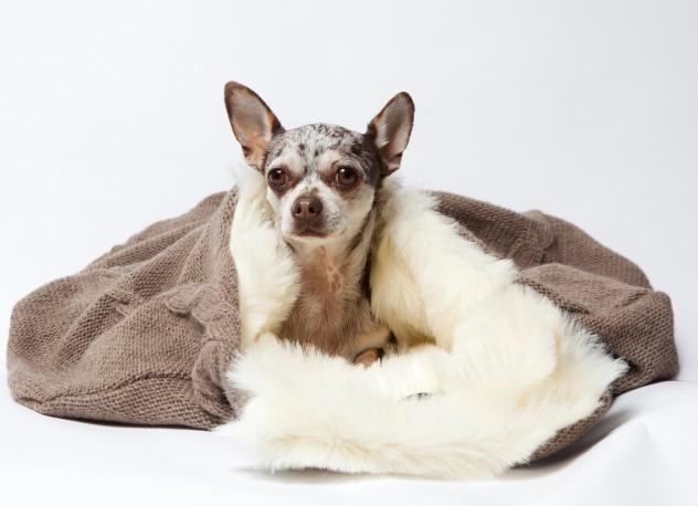 cama para perro