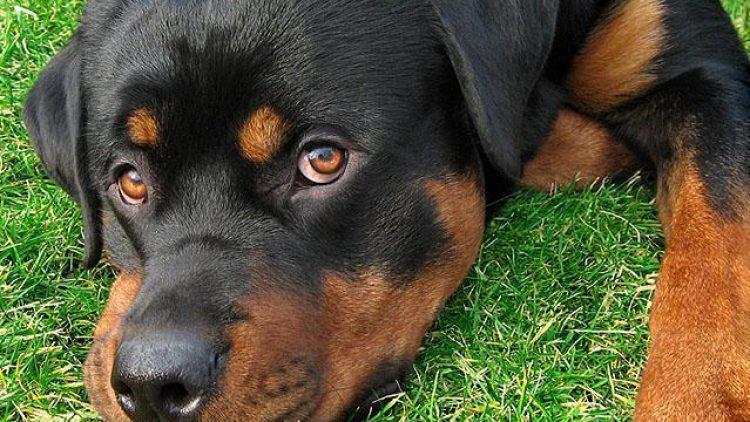 ley que prohibe cortar la cola y las orejas de las mascotas