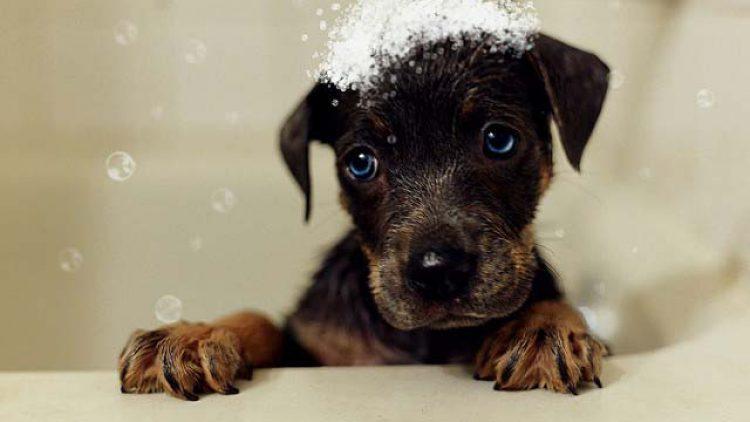 eliminar el mal olor de mi perro