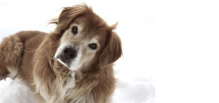 los perros ladean la cabeza