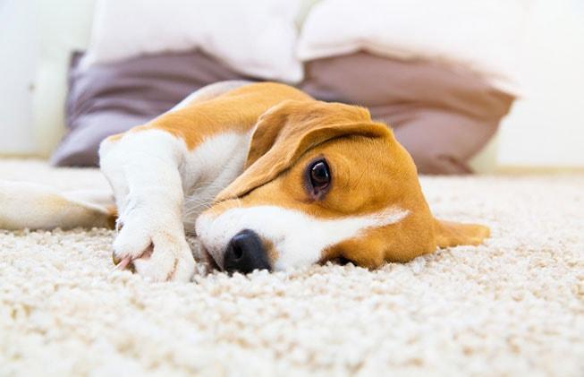 ¿Como afecta el clima a nuestras mascotas?