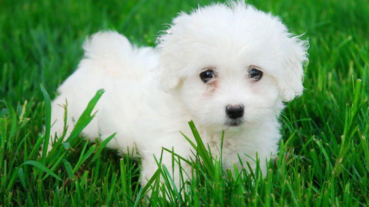 Cuidar de perros pequeños