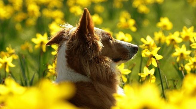 La alergia en los perros