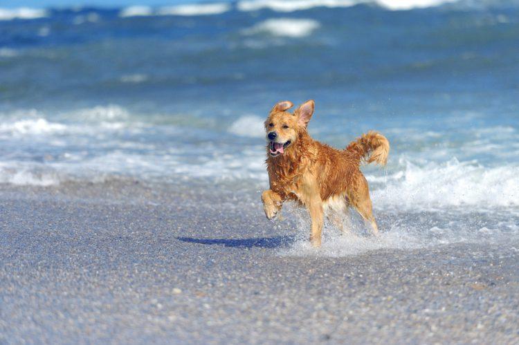 ¿Cuales son las playas para perros?
