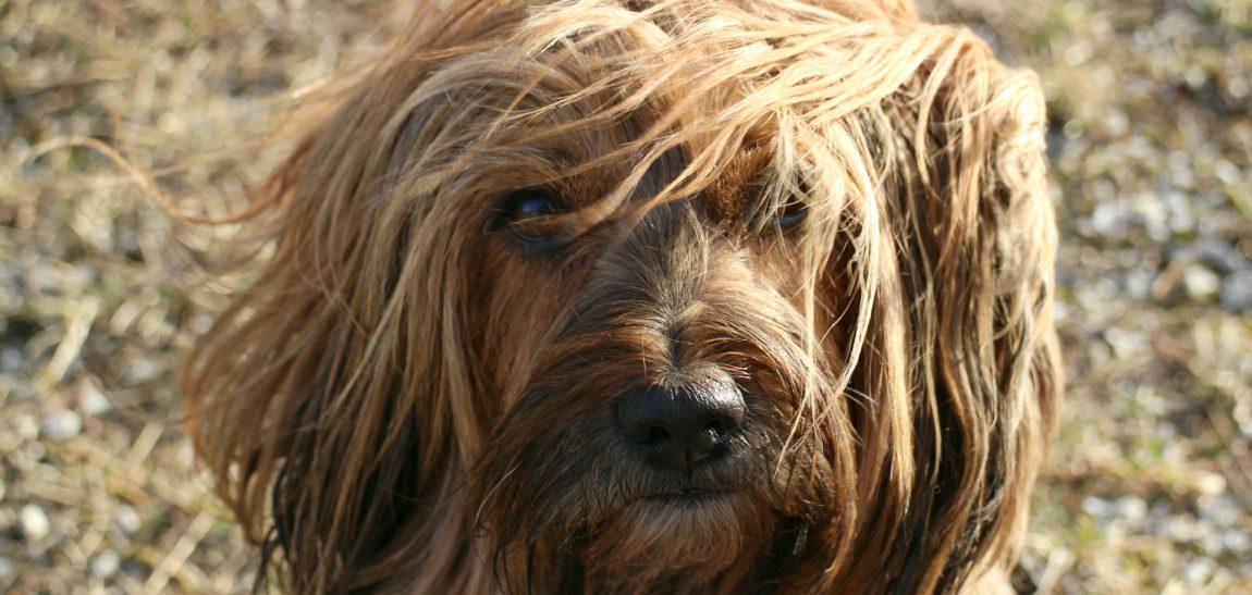 Ya llegó el verano, y yo con estos pelos!