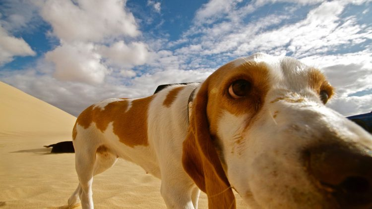 los mejores consejos para viajar con tu perro