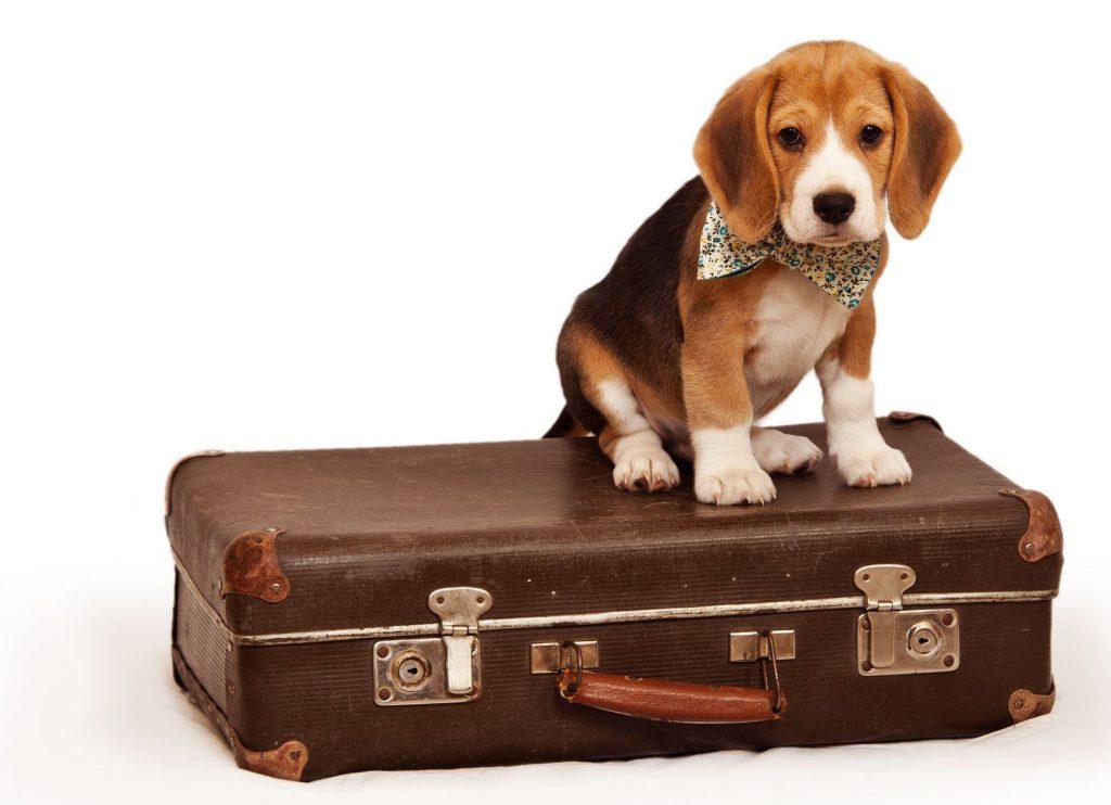 viajar con animales de compañía