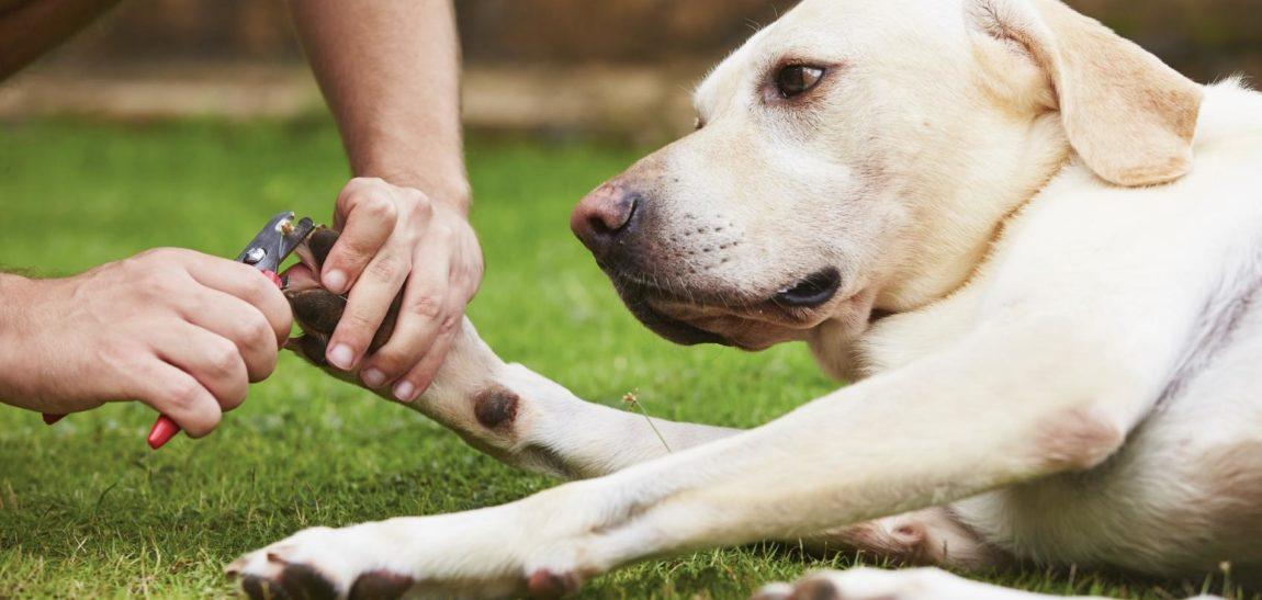recortar las uñas de tu mascota