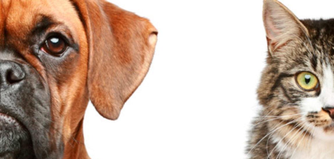 Cuidar de los ojos de tu mascota