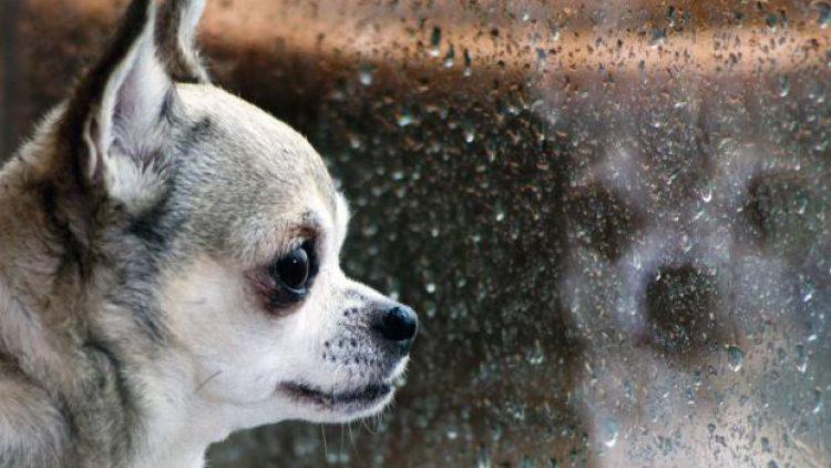 Los efectos del clima en las mascotas