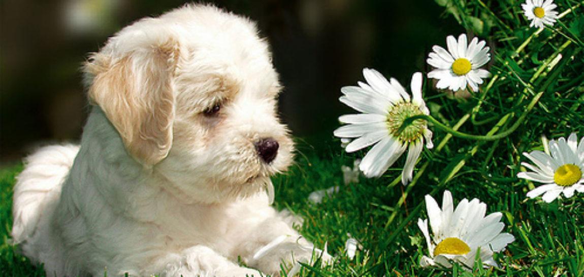 ¿Tu mascota tiene alergias en primavera?