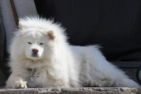 Beneficios del sol para tu perro