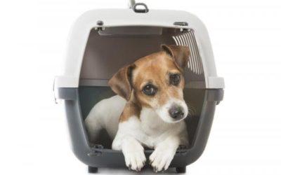 ¿Cómo Elegir un transportín para viajar en avión con tu mascota?